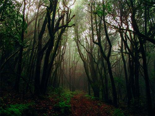 جنگل جیغ
